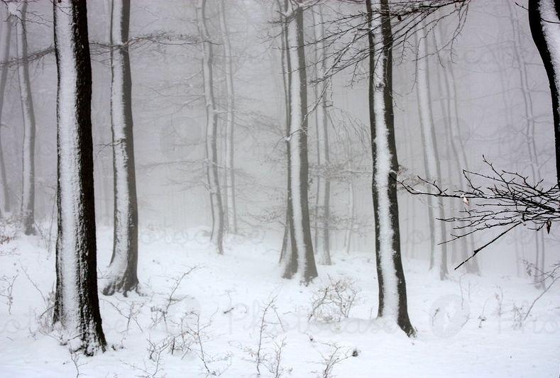 150057-wintertag-weiss-baum-dunkel-wald-schwarz-traurigkeit-schnee-photocase-stock-foto-gross.jpeg